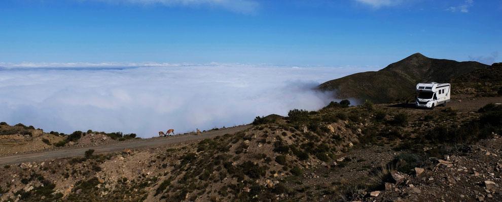 Unter uns das Nebelmeer. Nur wir und die Guanakos