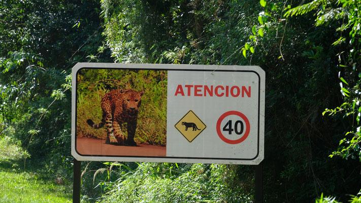 Zwar viele solche Schilder, aber Jaguare bekommen wir nicht zu Gesicht.