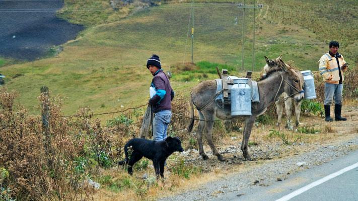 Hier wird  die Milch noch in alter Manier transportiert