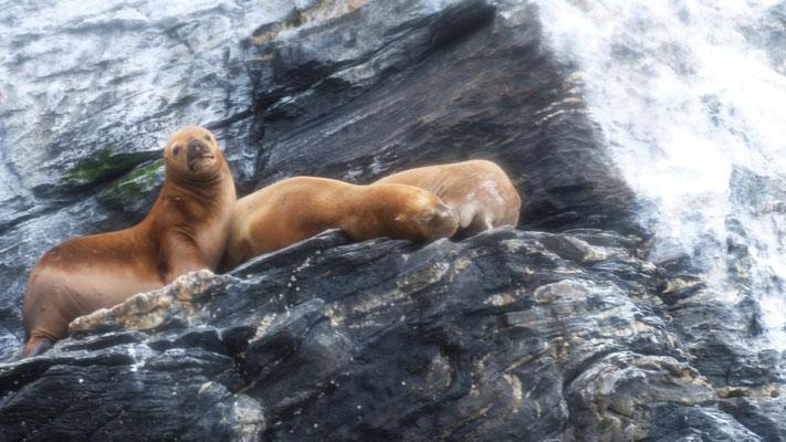 Die Seehunde ruhen wie immer an der Sonne