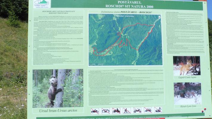 Hier gibt es Bären, Wölfe und Luchse