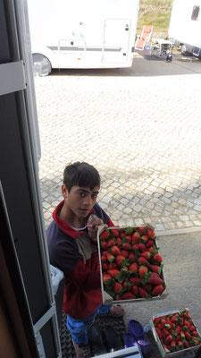 Den frisch geernteten gut duftenden Erdbeeren können wir  nicht widerstehen, da kommt unser Smoothiemaker wieder mal zum Einsatz.