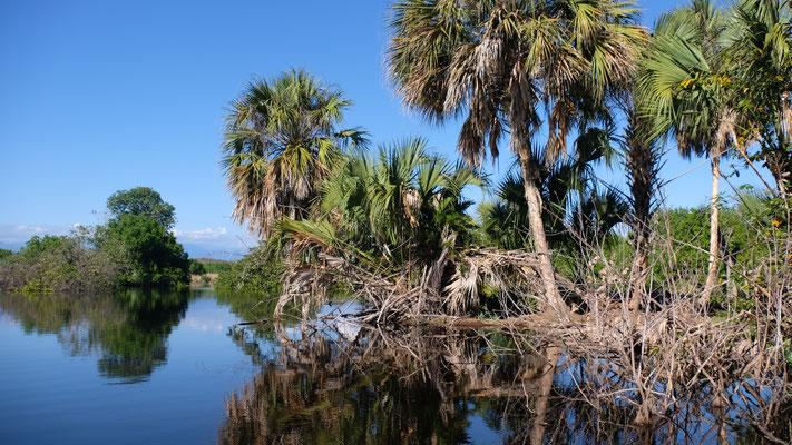 Gemächlich  werden wir durch die Mangroven gerudert