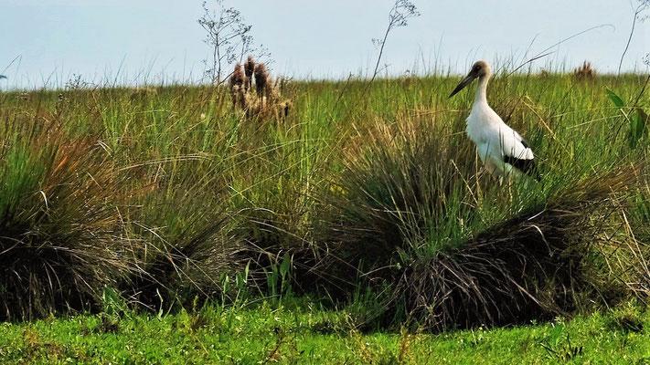 Ein amerikanischer Storch findet sich ebenfalls im Park