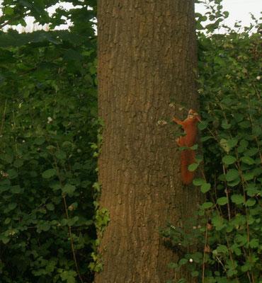 ....aber die Eichhörnchen finden es ebenfalls toll hier