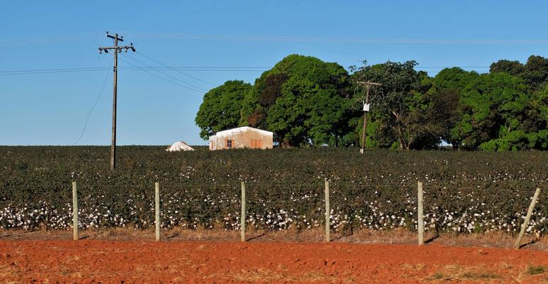 Auf der Höhe Baumwollfelder