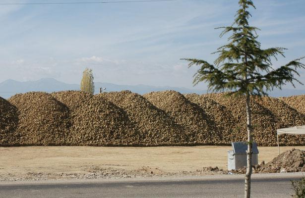 Zuckerrübenzwischenlager