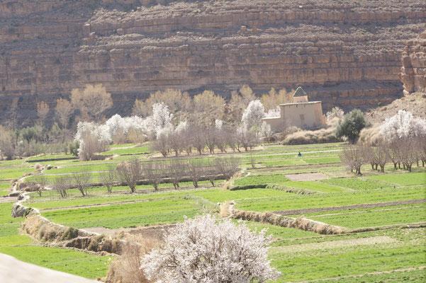 Herrliche blühende Bäume