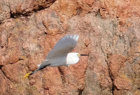 ... Vogelbeobachtung