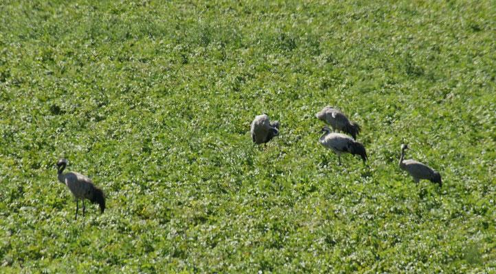 zumal wir auf dem Weg immer wieder grosse Vögel beobachten können