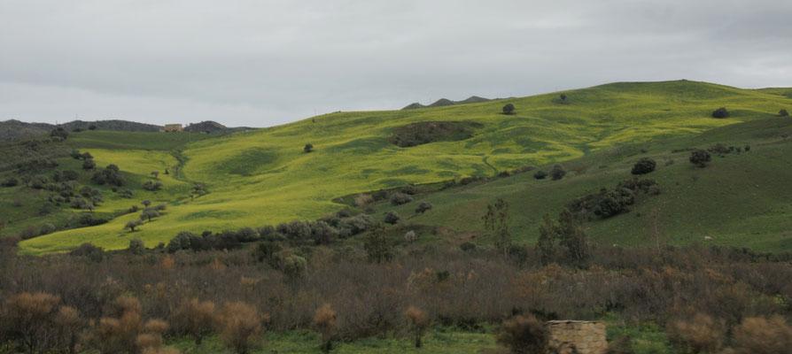 Die Landschaft ist sowas von grün