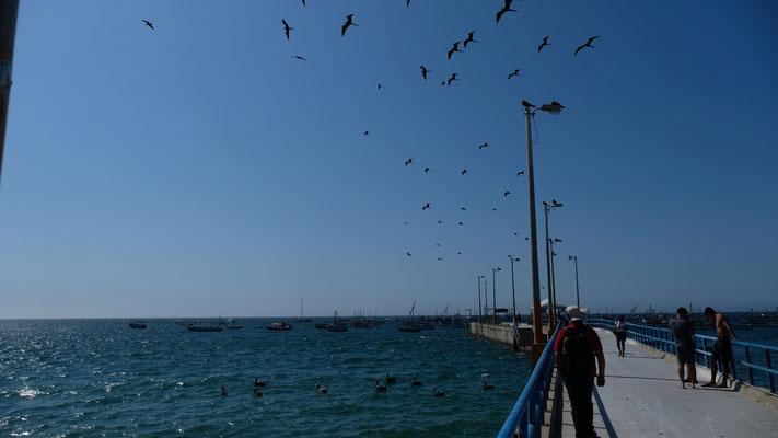 Wir stellen uns an den Strand, laufen zum Pier und...