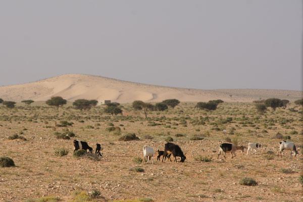 Savanneh es fehlen nur noch die Elefanten und die Löwen