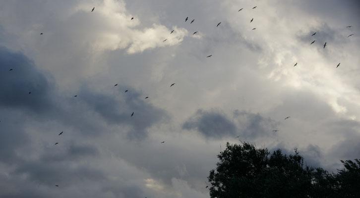 ...lassen sich die Möwen vom Sturm tragen.