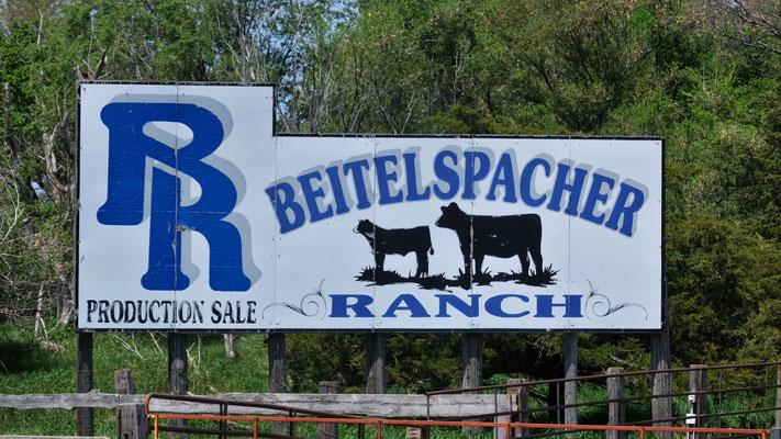 Sehr viel Viehwirtschaft in South Dakota