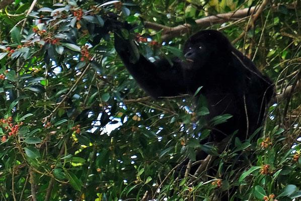 Begrüsst werden wir von einem Affen,.....