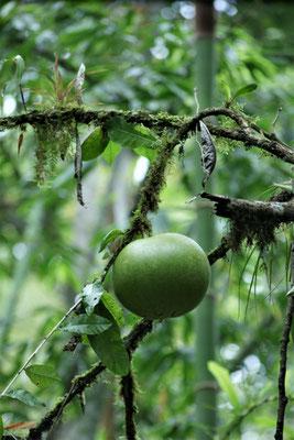 Spezielle Früchte
