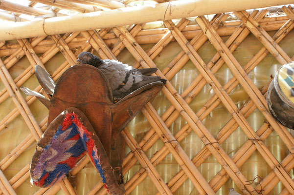 Die Taube sucht sich ein Nest
