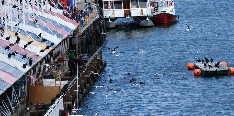 ...eigentlich gefällt nur der Fischmarkt mit den sich über die Fischabfälle freuenden Tiere.