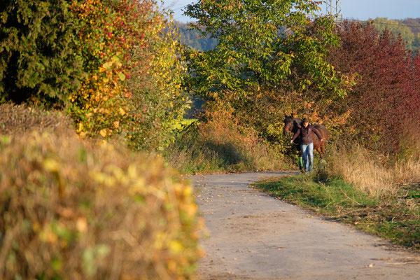 .... der Herbst zeigt sich wieder von seiner schönsten Seite.