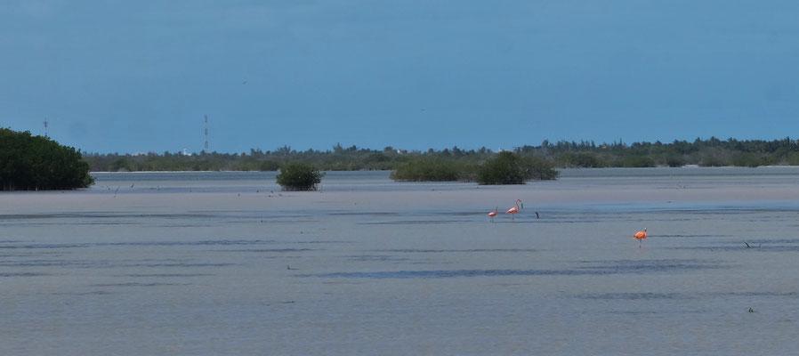 und sogar einige wenige Flamingos entdecken wir dort.