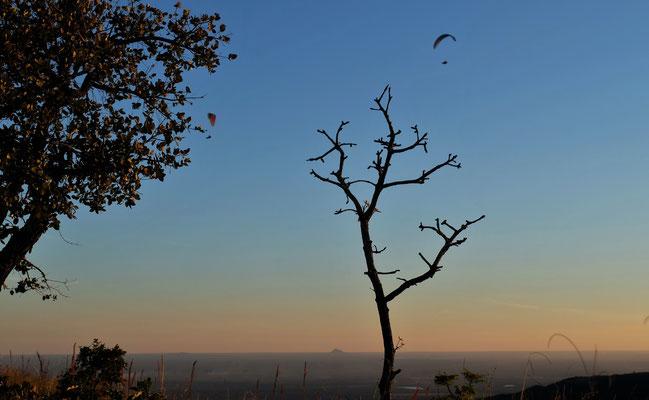 Blick ins Pantanal