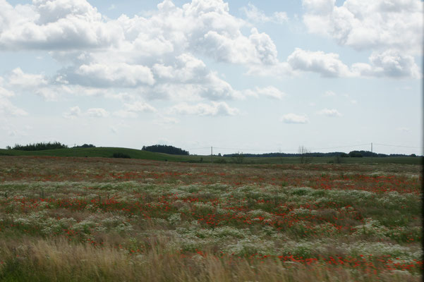 gewaltige schöne Kornfelder