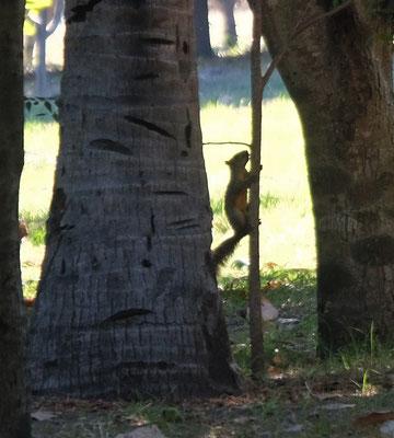 ... und auf dem Campingplatz erfreuen uns die Eichhörnchen.