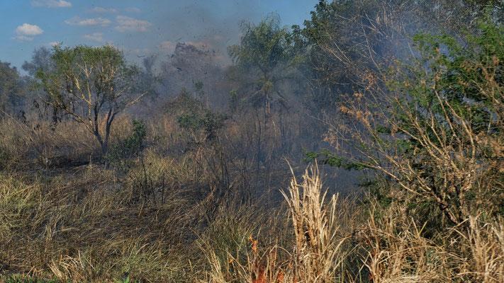 Dazwischen brennt öfters ein Busch-, und Waldstück