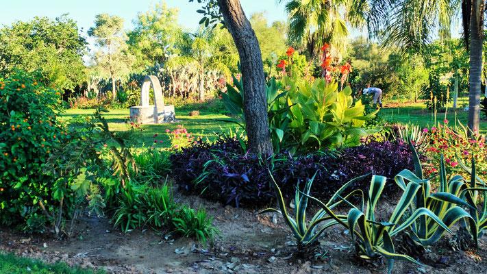 im Garten wachsen viele Heilkräuter...