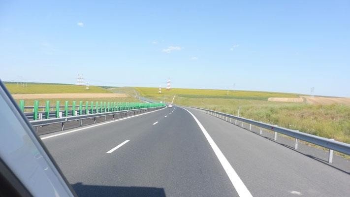Sonnenblumenfelder entlang der Autobahn nach Constanta