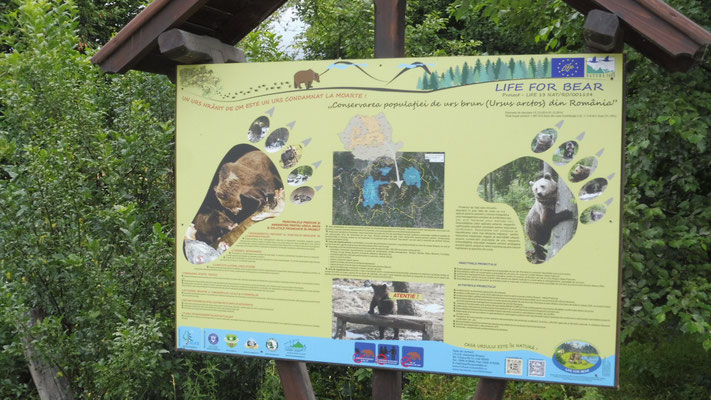 Im Bärengebiet bei Rosenau