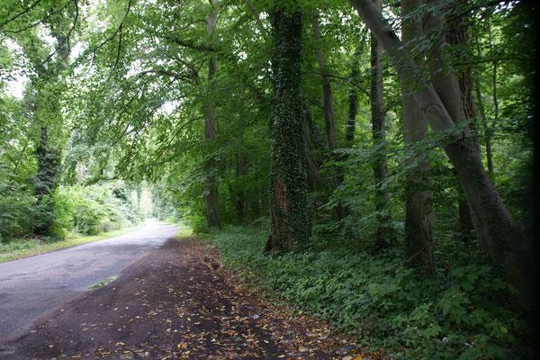 Verwunschene Wälder auf der Fahrt zwischen Stettiner Haff und Ostsee