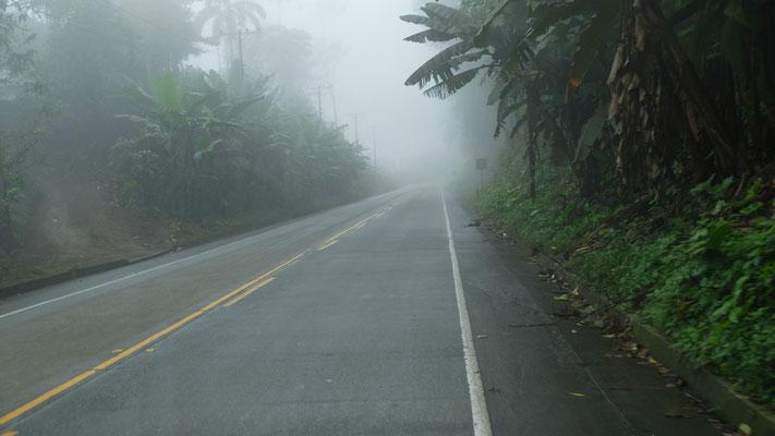 Zuerst im Nebel
