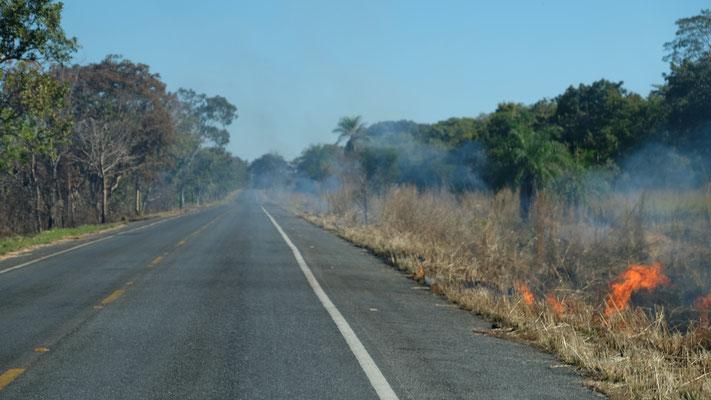 Auf Asphalt die ersten 100 km, aber immer wieder brennt es am Strassenbort.