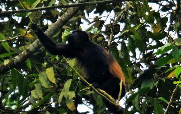 Die Affen zeigen uns ihre Kunststücke