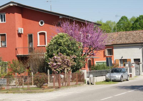 Das Dorf in seiner vollen Blüte
