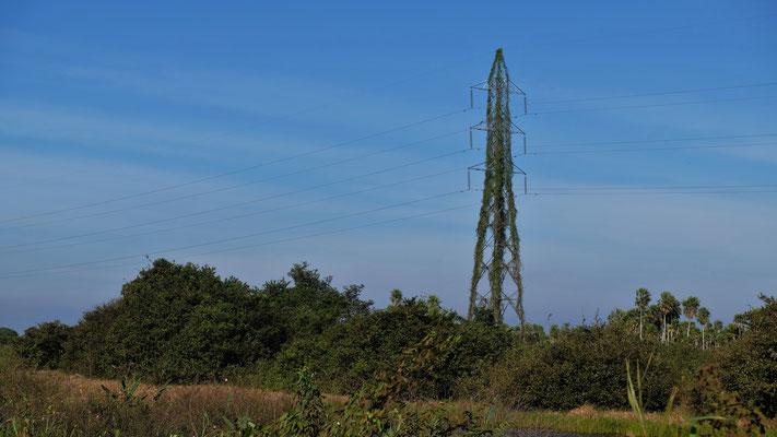 Sogar die Strommasten werden von der Natur einverleibt.