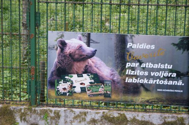 Wir sehen Bären....