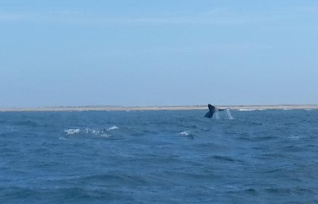 Tschüss Grauwale