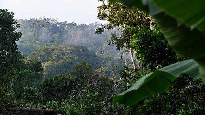Total im Urwald drin, jedoch ohne Affen