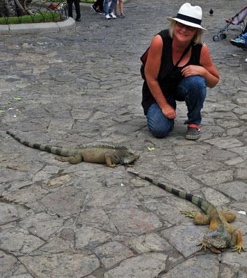 und den Leguanen