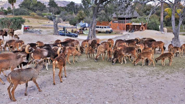 ... Africam Safari Park