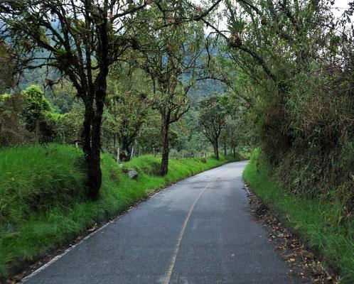 rein ins Valle de Cocora