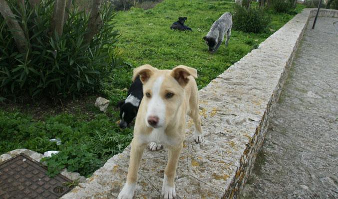 Welchen Hund sollen wir retten? Machen jedoch einen zufriedenen Eindruck