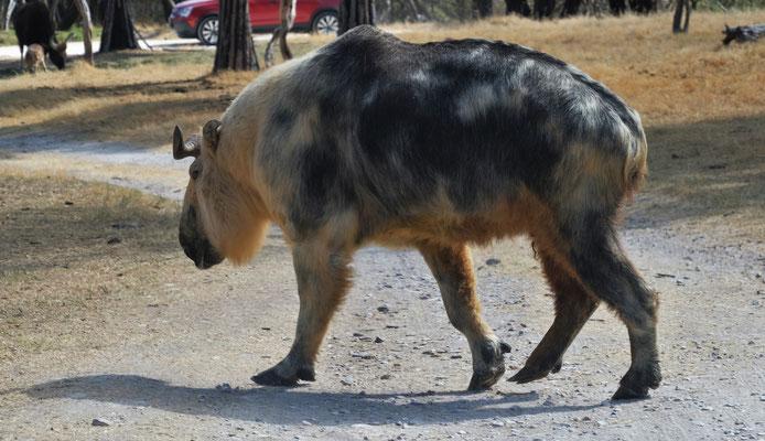 Keine Ahnung was das für ein Tier ist.