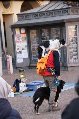 Vorführung mit Hunden
