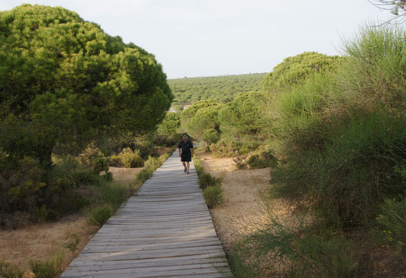Durch das Tor über den Steg und die Dünen Richtung Meer in Andalusien