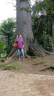 ...echt grosse Bäume, leider.....