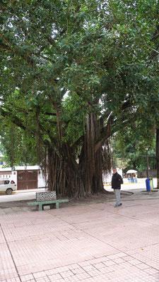So einen Baum hätte Alois auch gerne im Garten